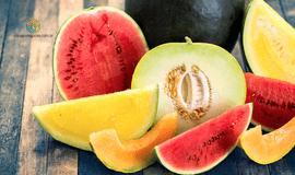 Preço ao produtor de melão amarelo se desvaloriza
