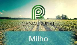 Milho: seca avança e grão se valoriza no Brasil