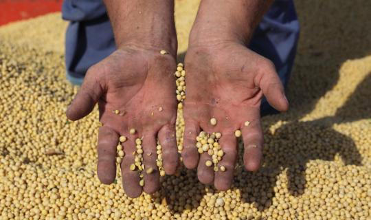 A contribuição da Agricultura Familiar no recorde da safra de grãos