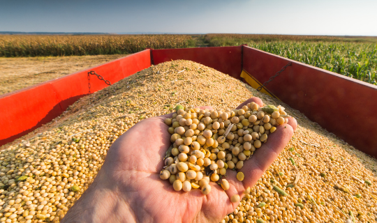 Preço recorde de grãos: Bom para os agricultores, pesadelo para os pecuaristas